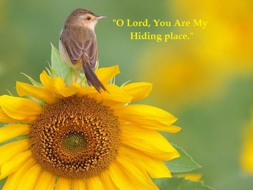 hiding place O Lord